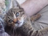 Rutu Modan, il gatto